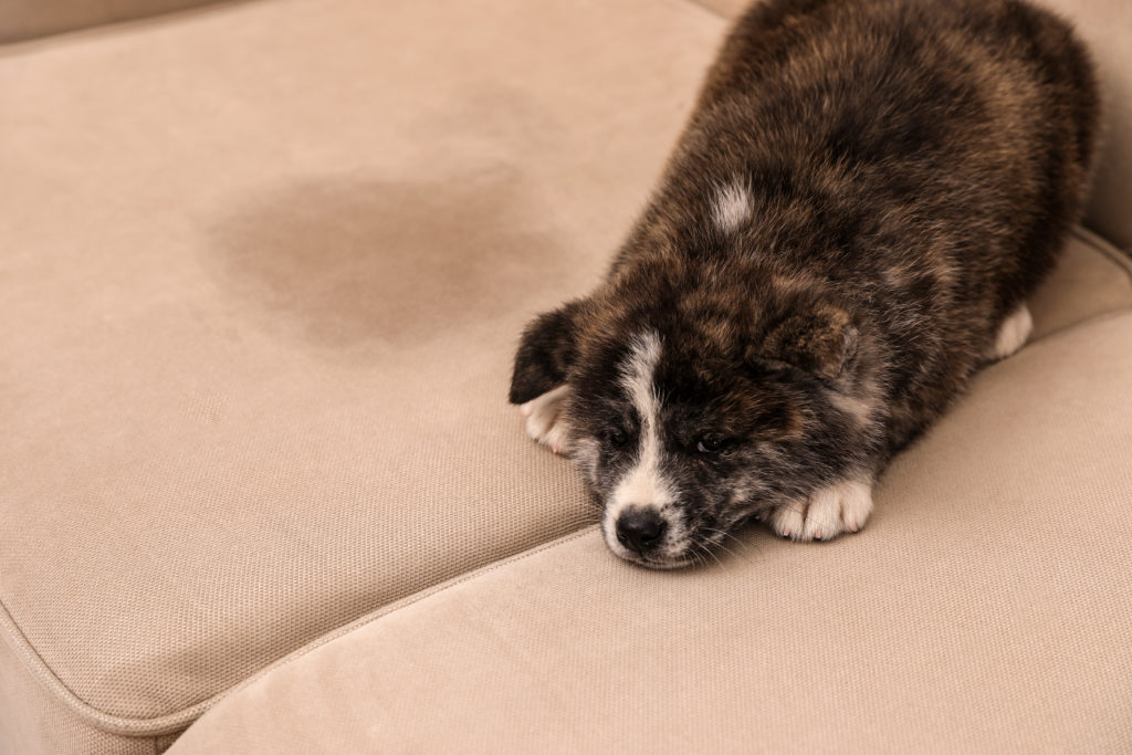 Pet Owner Furniture Tips